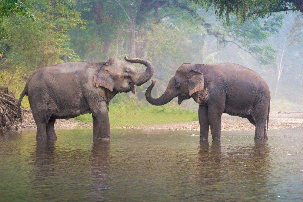 a fazer em Elephant Camp Thom
