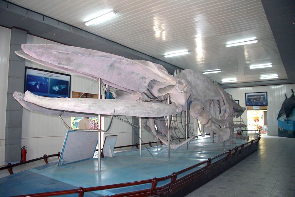 a fazer em Museu Nacional Oceanográfico