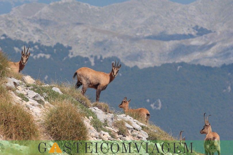 Abruzzo Lazio e Parque Nacional Molise