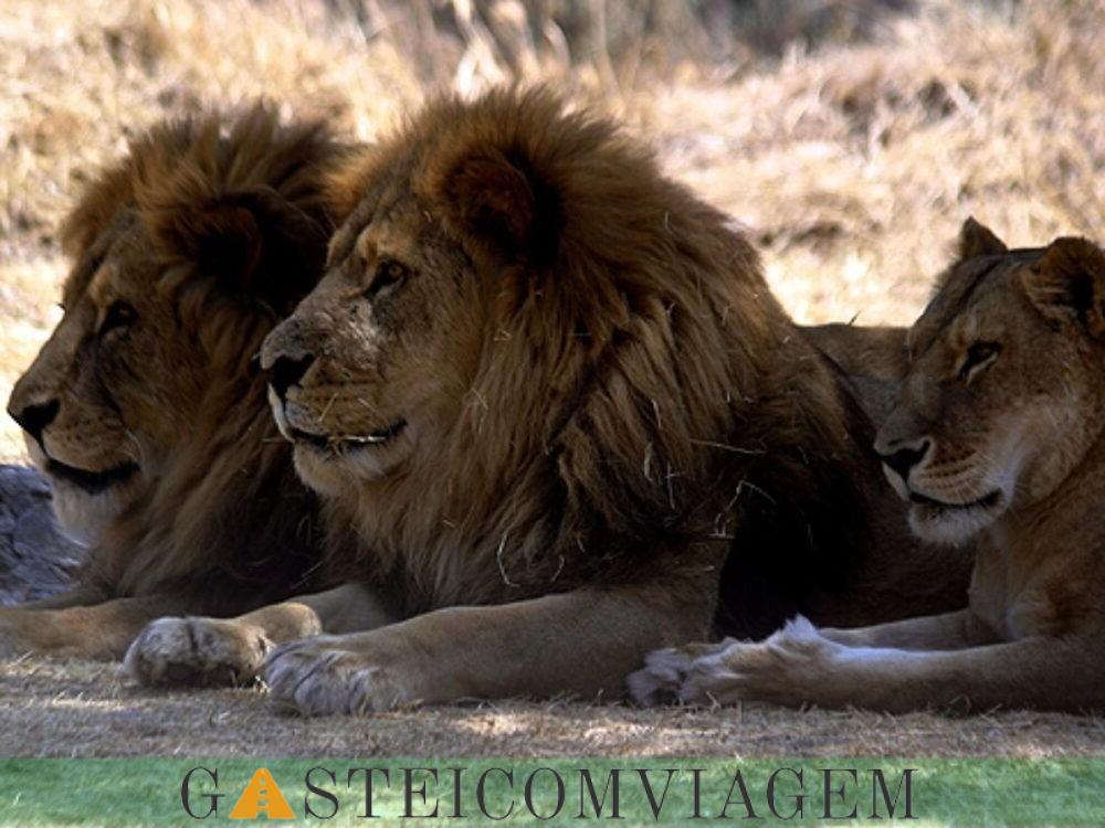 Africano Safari