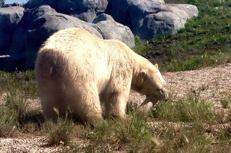 Assiniboine Zoological Park