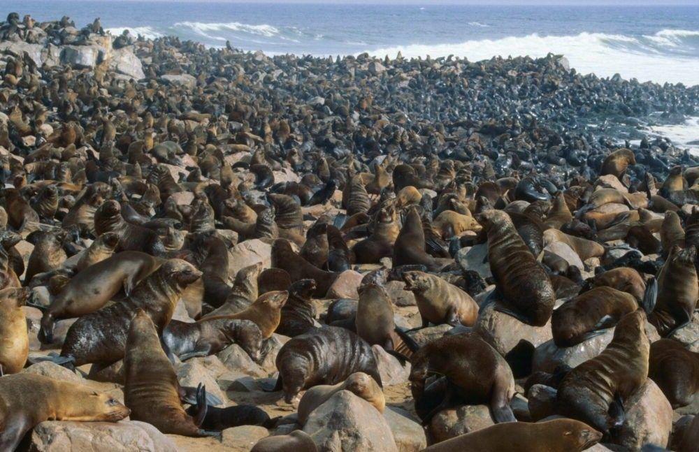 atração turística Cape Cross