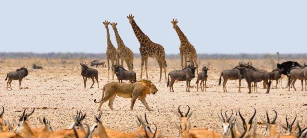 Atração turística Parque Nacional Etosha