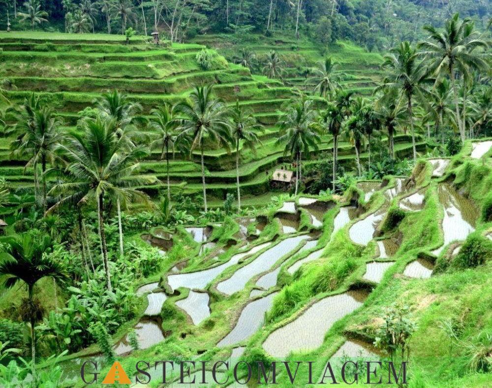 Bali Terraços do arroz