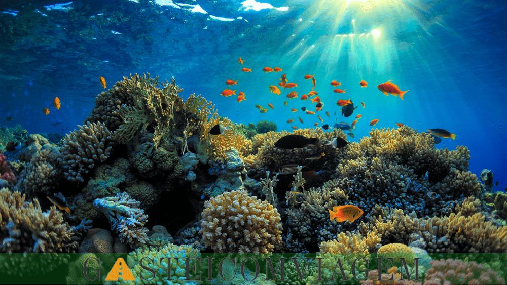 Barbados Barreira Reefspng
