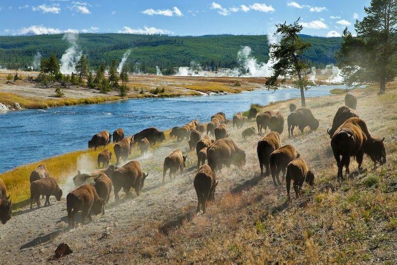 Bozeman Yellowstone
