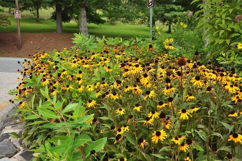 Daniel Boone jardins nativos
