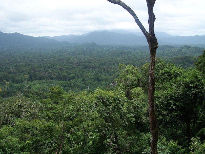 de banana reserva rio biosfera