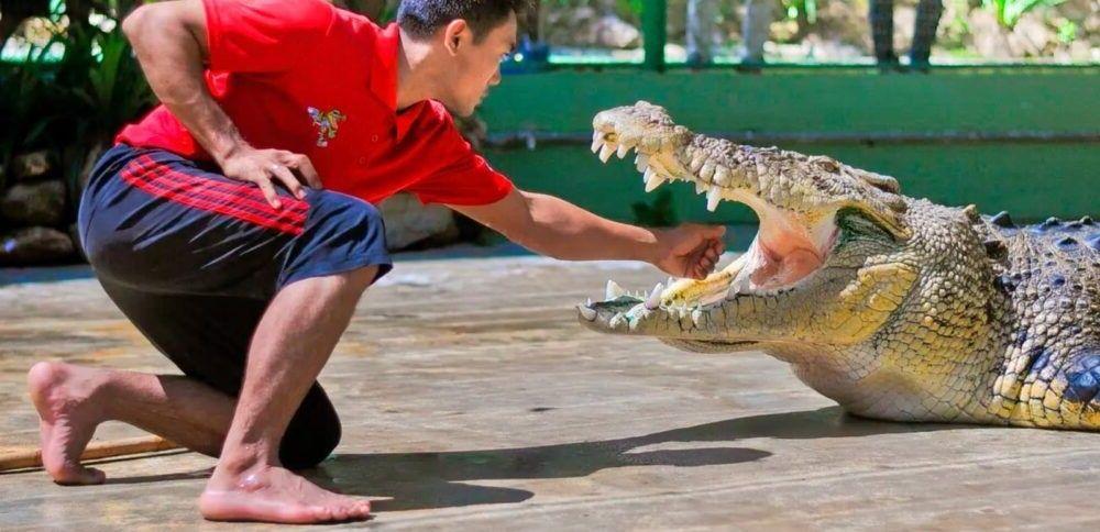 Destination Resort Crocodile Adventureland