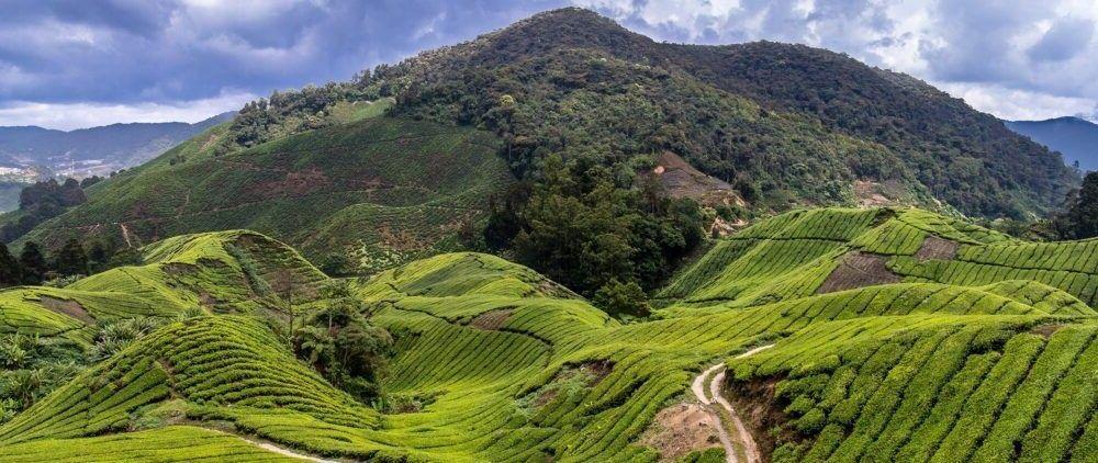 destino Cameron Highlands Malásia