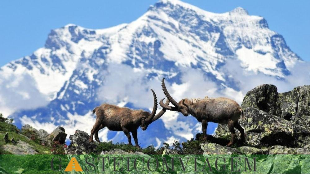 destino grande parque nacional aradiso