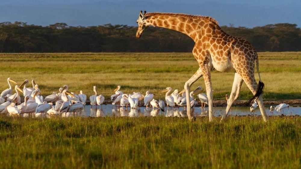 Destino Kenya National Park Lake Nakuru