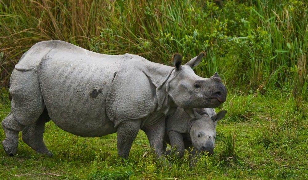 Destino Parque Nacional Chitwan