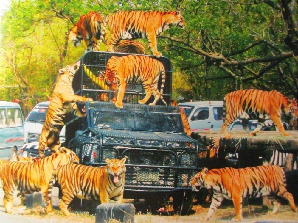 Destino Safari World Bangkok