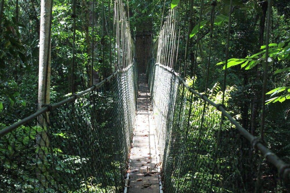 Destino Taman Negara Malaysia
