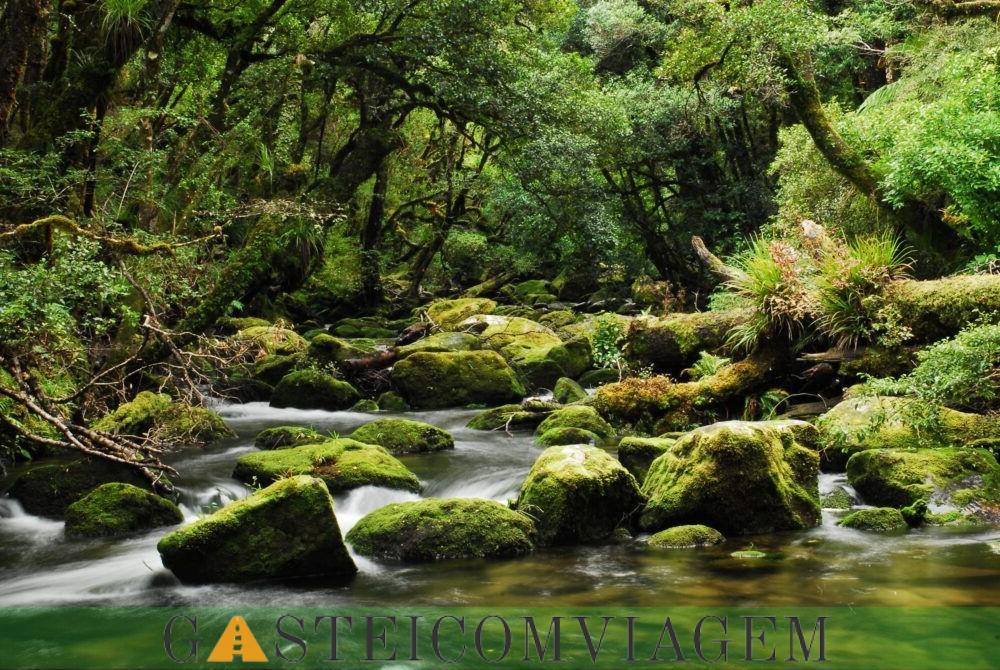 destino Te Parque Nacional Urewera