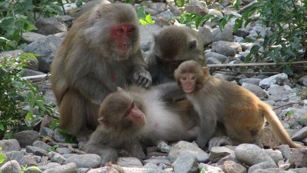 destino Vietnamita Monkey Island