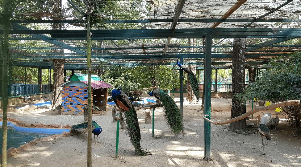 Destino Wildlife Park Langkawi Malasiapng
