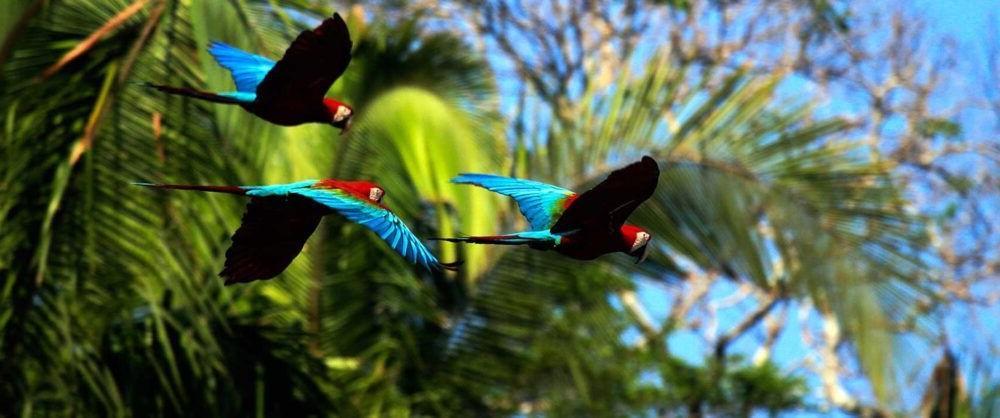 exotica do Parque Nacional do Manu