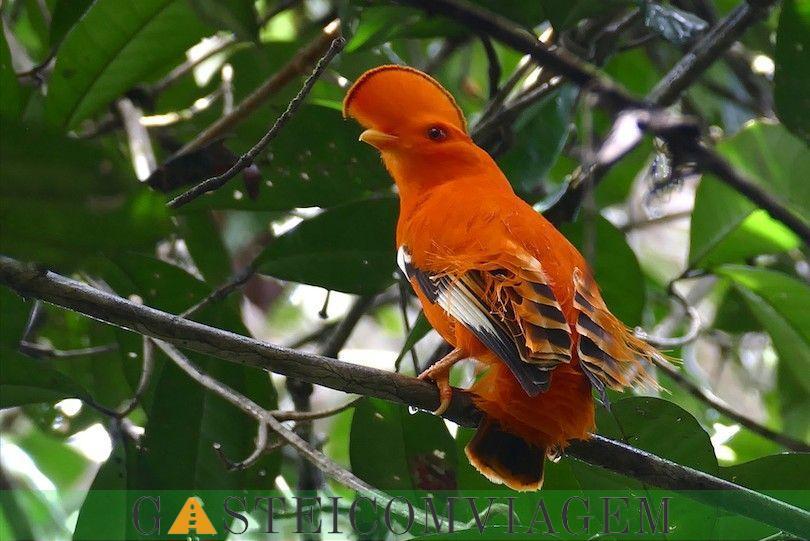 guiana amazônica Parque Nacional