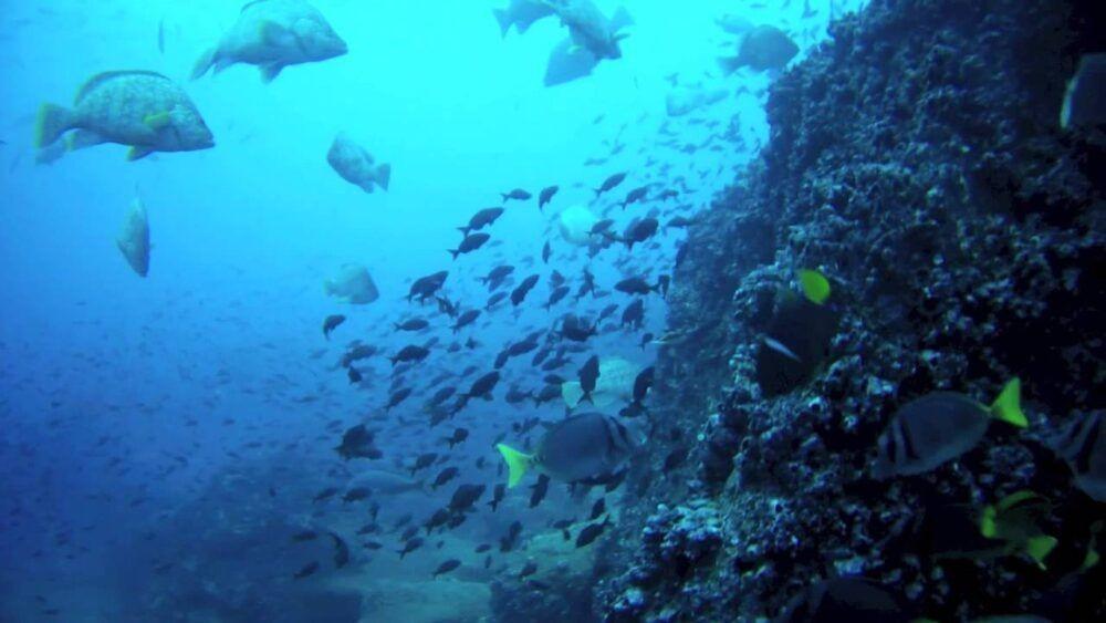 Ilha de Darwin e Wolf