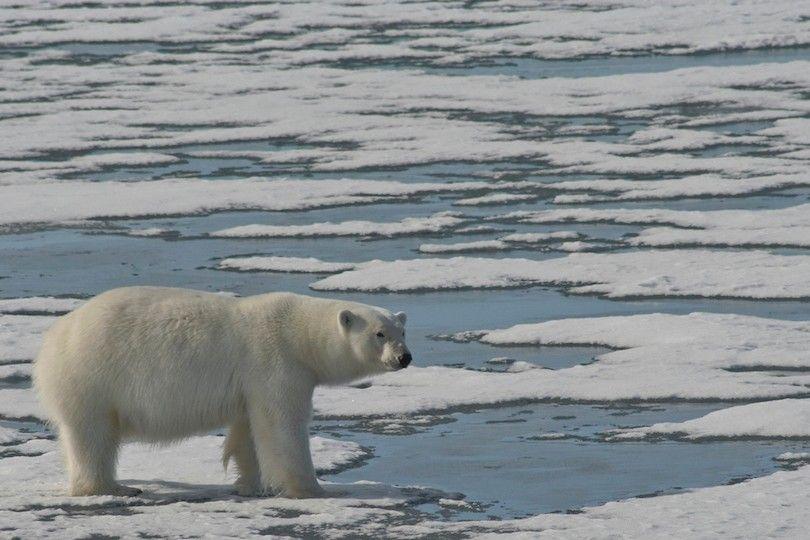 ilha de Wrangel