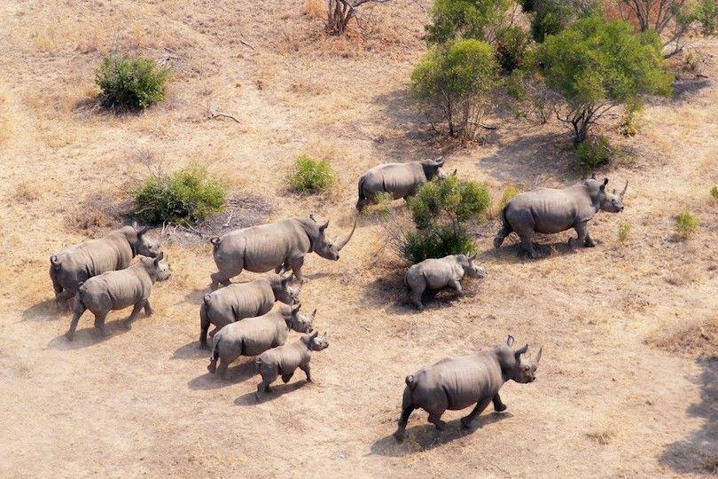 Kruger parque nacional