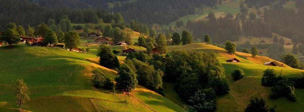 Lowlands Bernese