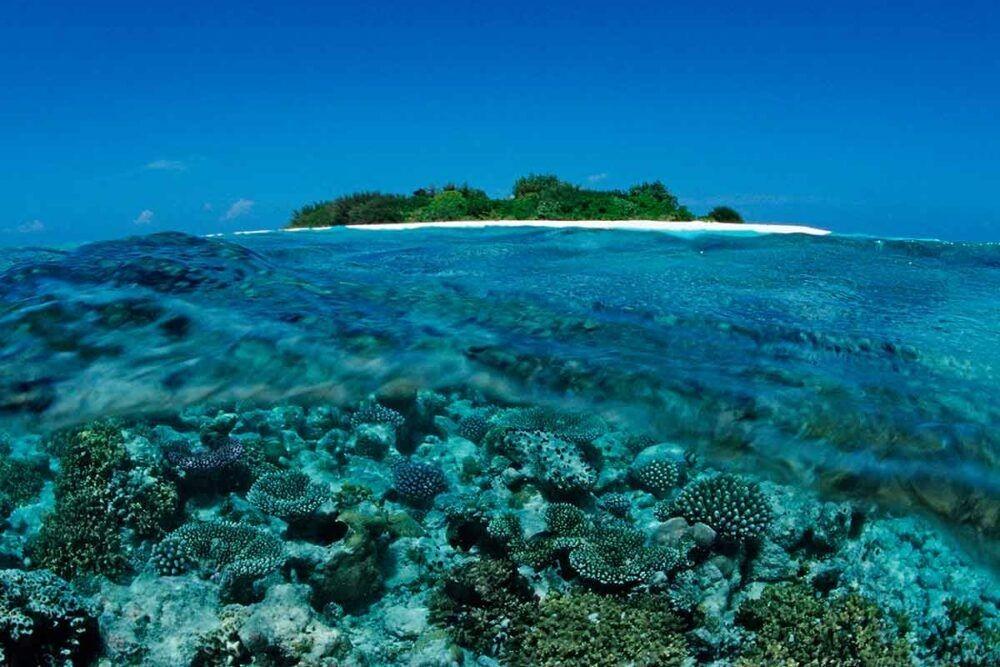 Maldivas Reefs
