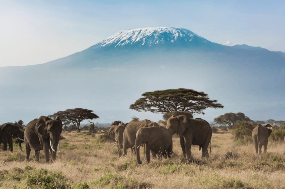 Parque Nacional Amboselipng