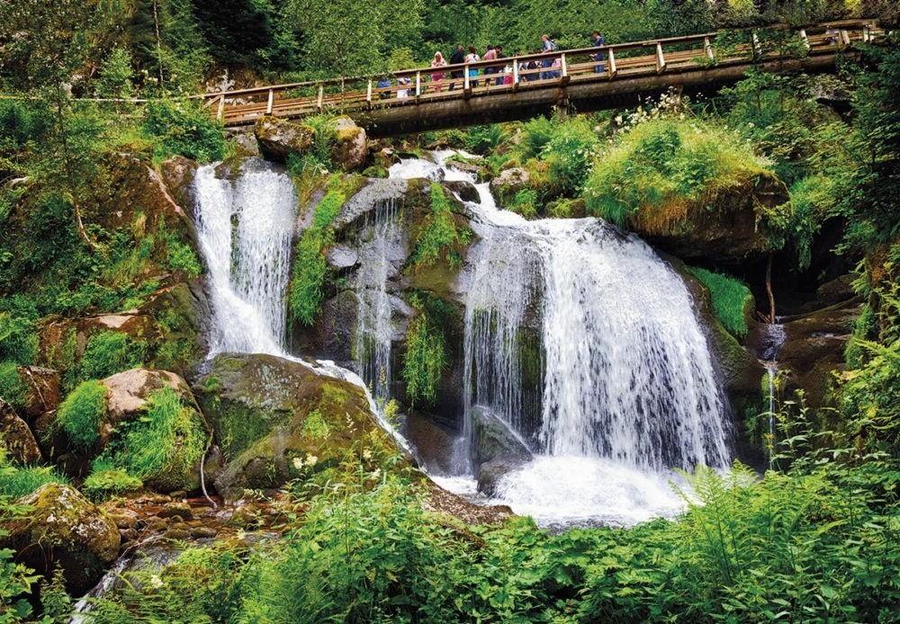 Parque Nacional da Floresta Negra