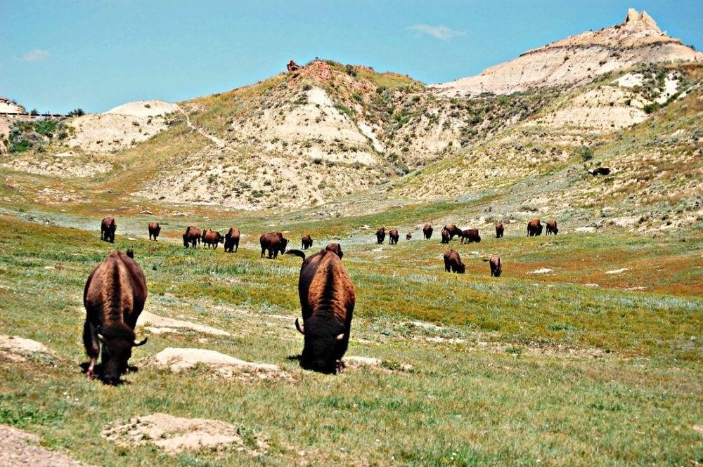 Parque Nacional de Theodore Roosevelt Unidade Sul