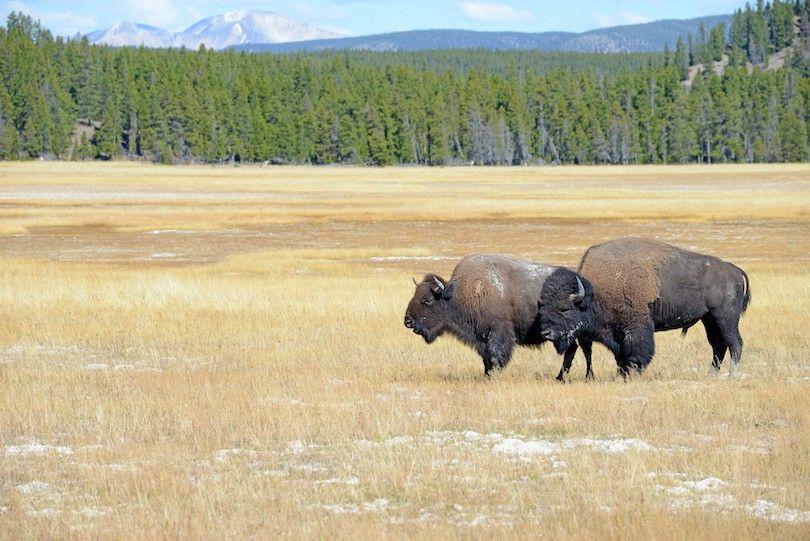 Parque Nacional de Yellowstone NSP