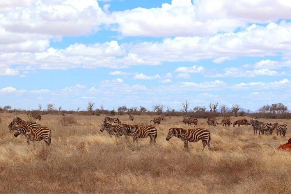 Parque Nacional destino Quênia Tsavo East