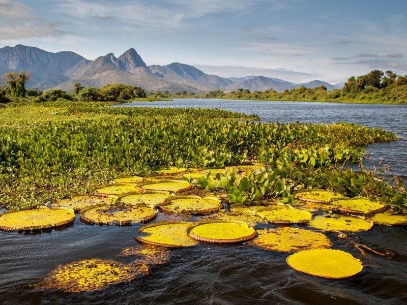 Parque Nacional do Pantanal Matogrossense Brasil