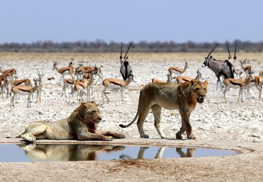 Parque Nacional Etosha