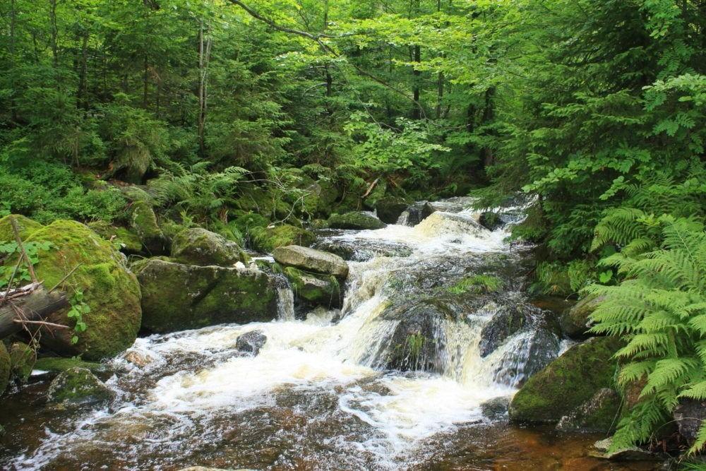 Parque Nacional Floresta da Baviera