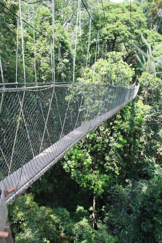 Parque Nacional Hospedagem em Taman Negara0