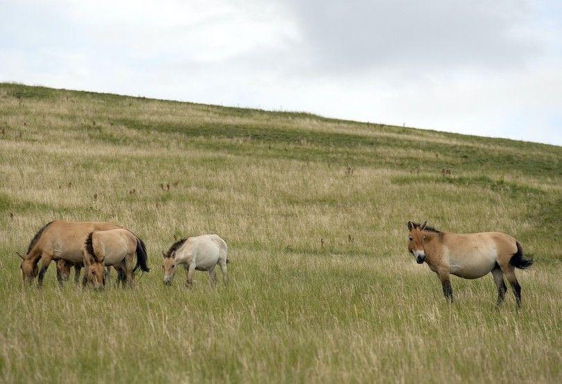 Parque Nacional Khustain Altay