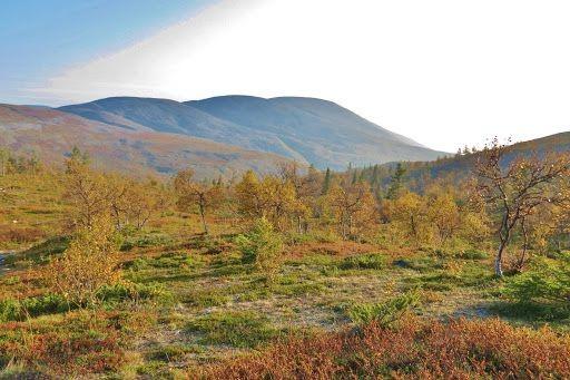 Parque Nacional Pallas Yllastunturi