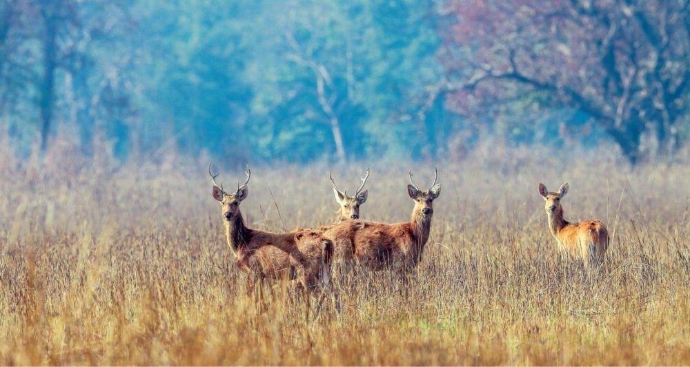 Parque Nacional Shuklaphanta