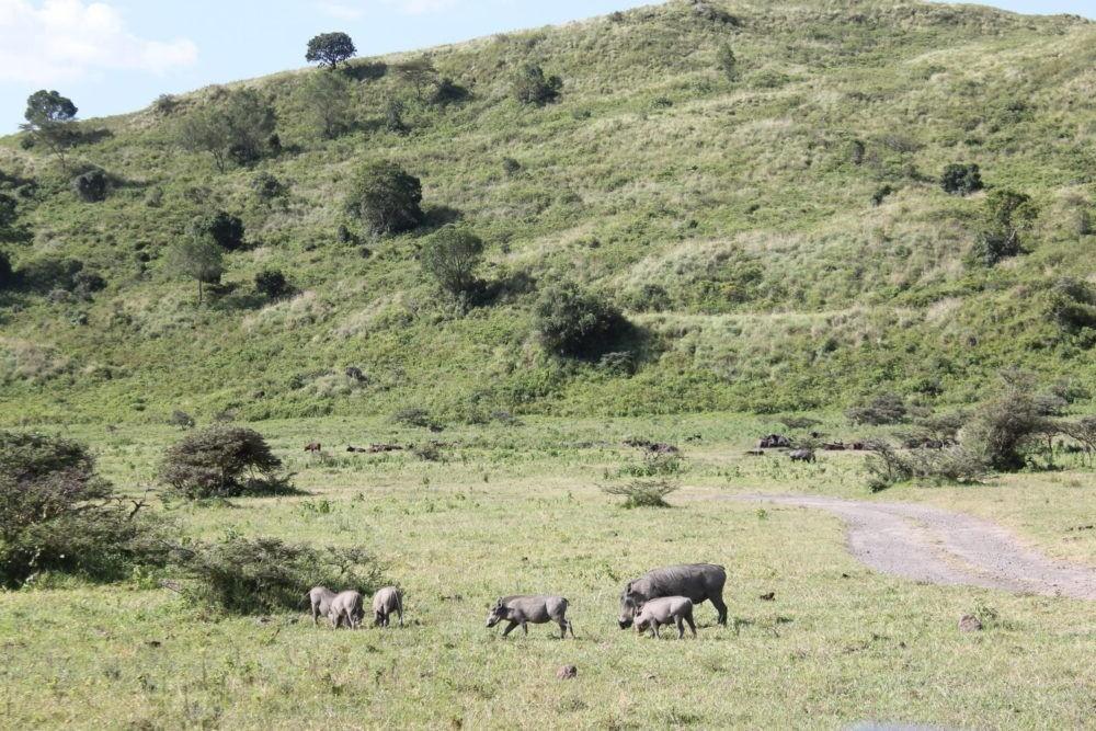 passeio Parque Nacional Arusha