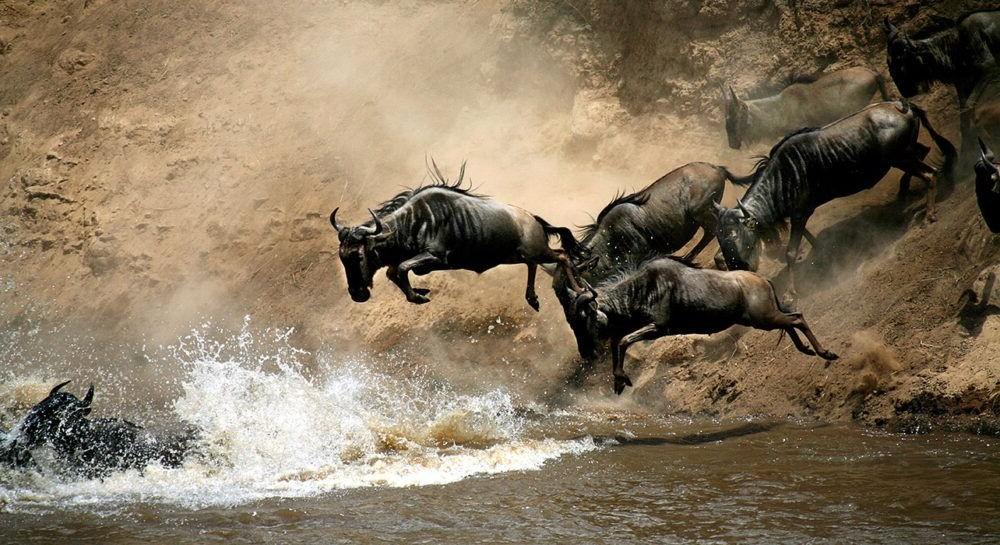 Posto de Masai Mara National Reserve