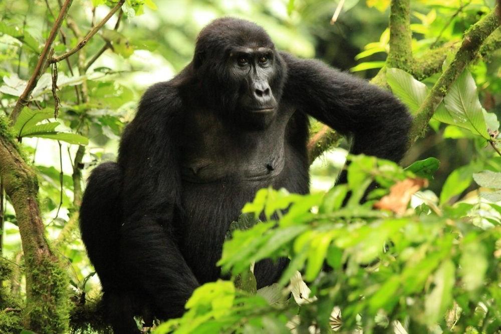 Posto do Parque Nacional de Bwindi Impenetrável