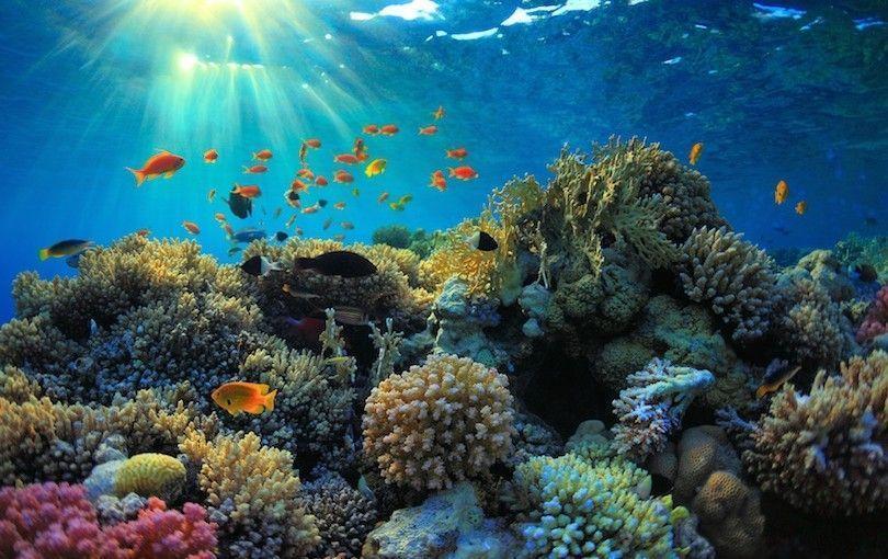 recife vermelho