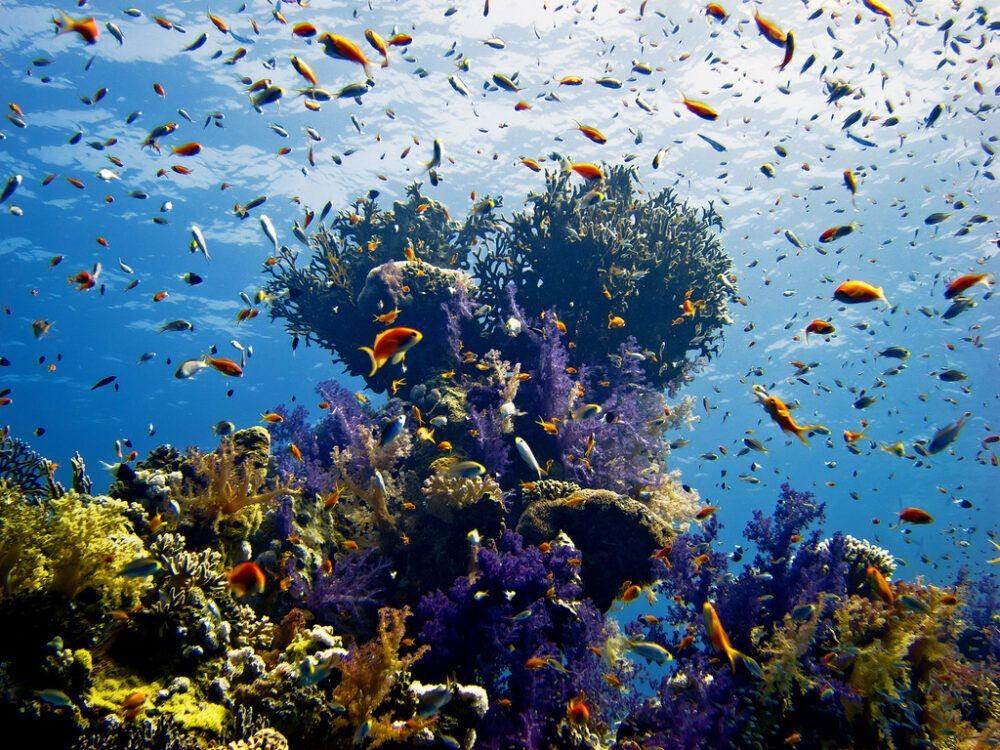 Reef Mar Vermelho