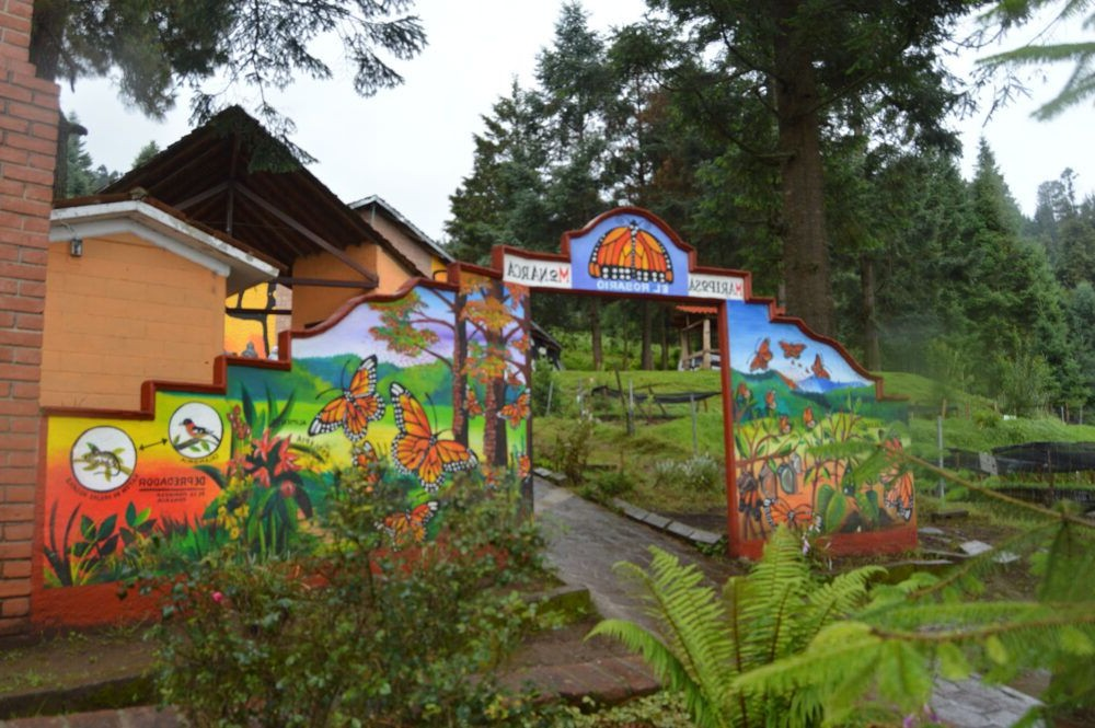 Reserva da Biosfera da borboleta-monarca