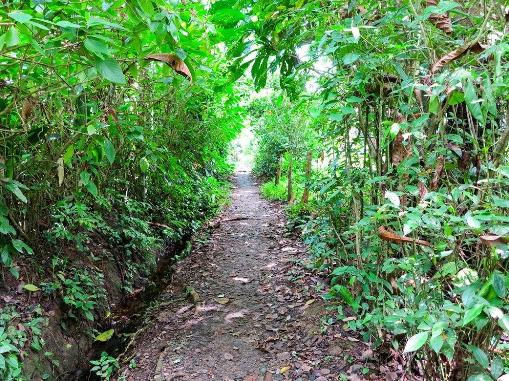 Reserva Monteverde Cloud Forest