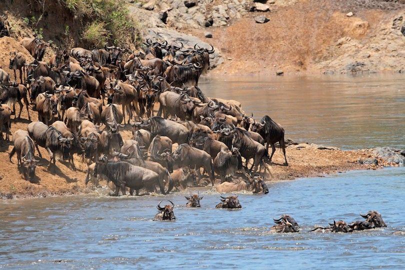reserva nacional de mara do masai