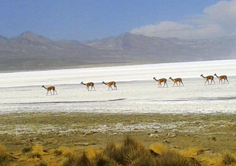 Reserva Nacional Salinas y Aguada Blanca